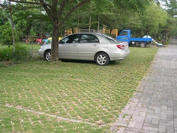 停车场草坪种植草坪种子绿化